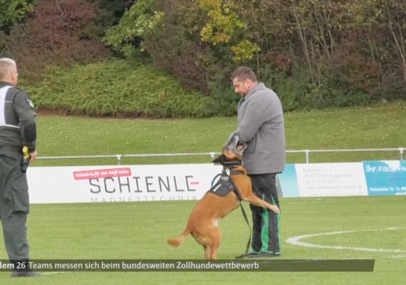 Der TÜV für den Zollhund   schwäbische.de